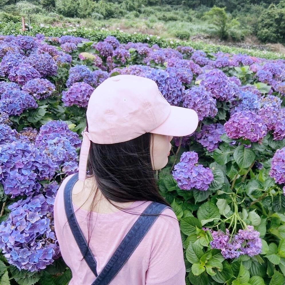 大賞園繡球花田|花海.jpg