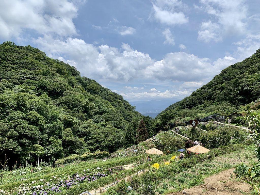 大梯田花卉生態農場|陽明山竹子湖繡球花季03.jpg