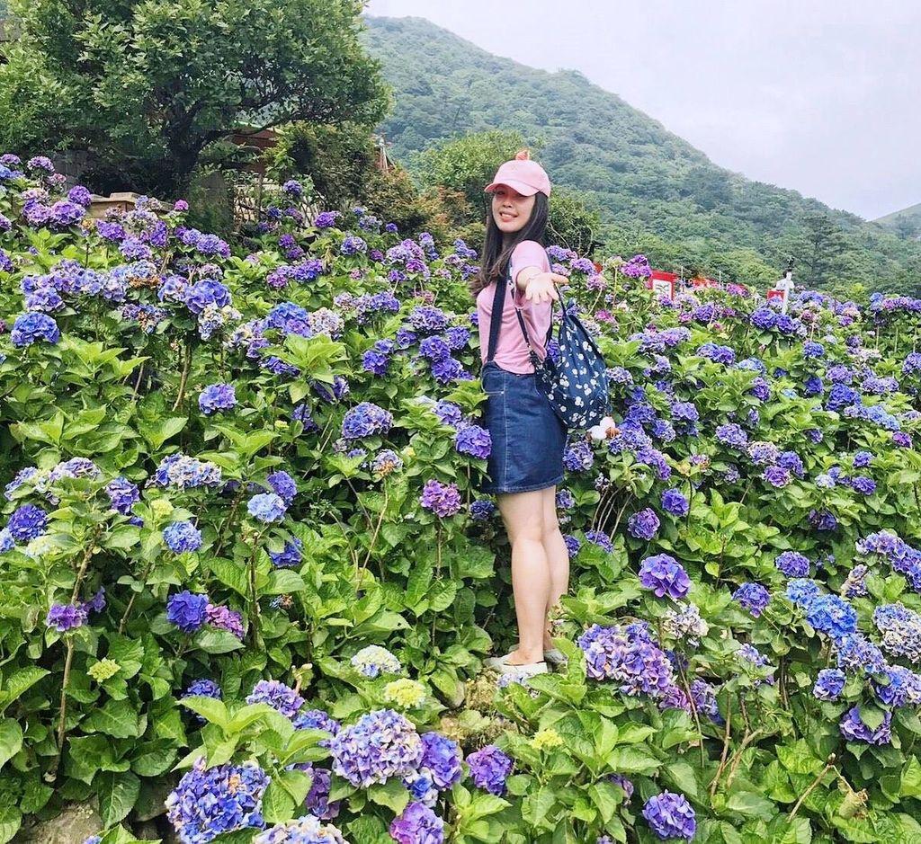 大賞園繡球花田|美麗花海.jpg