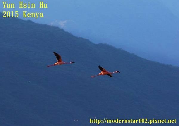 1040822紅鶴1894A1601 (640x452)