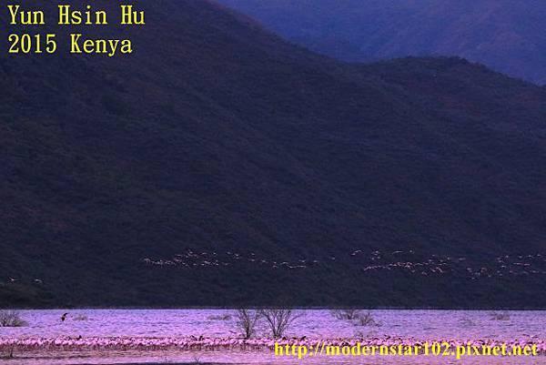 1040822紅鶴1894A0794 (640x427)