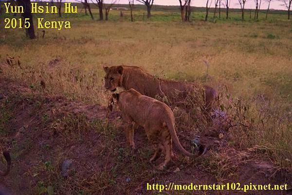 10408223Lake NakuruDSC02842 (640x427)
