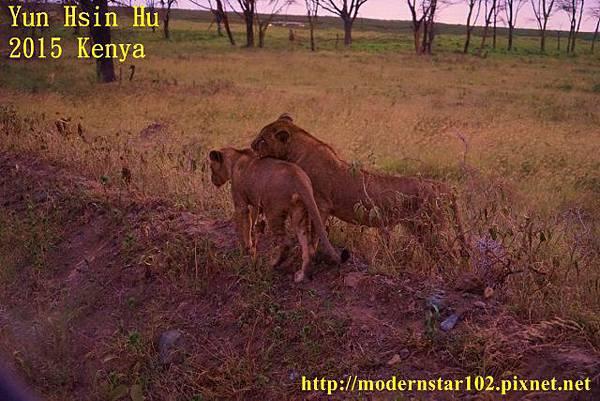 10408223Lake NakuruDSC02843 (640x427)