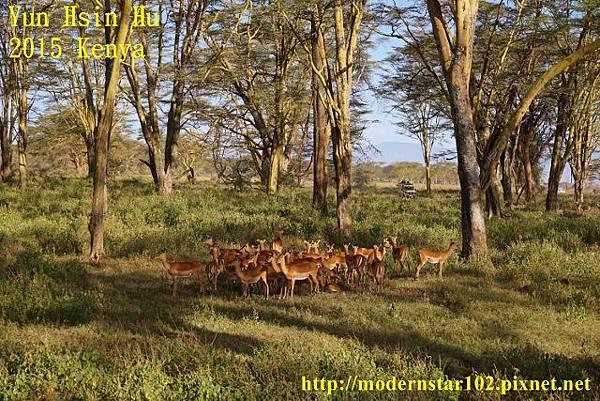 10408223Lake NakuruDSC02710 (640x427)