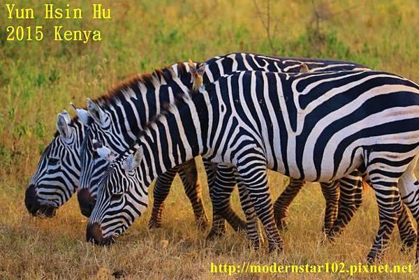 10408223Lake Nakuru894A2485 (640x427)