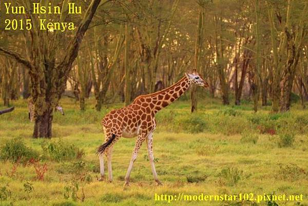10408223Lake Nakuru894A2543 (640x427)