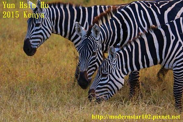 10408223Lake Nakuru894A2468 (640x427)