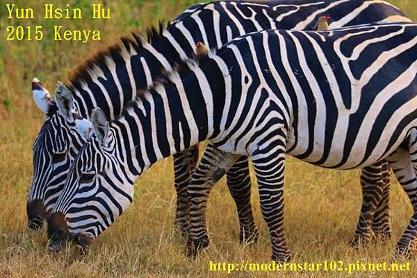 10408223Lake Nakuru894A2478 (640x427)