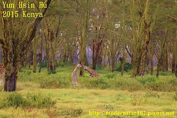 10408223Lake Nakuru894A2425 (640x427)