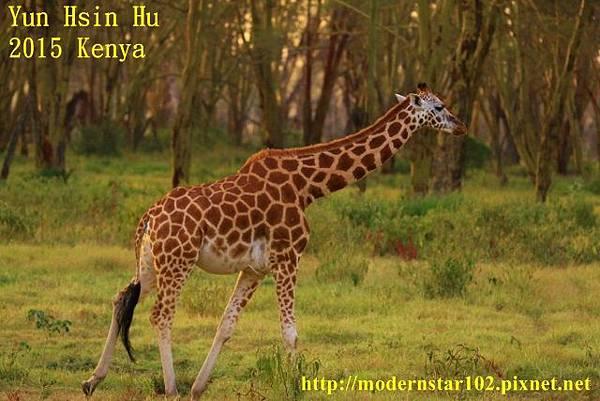 10408223Lake Nakuru894A2546 (640x427)