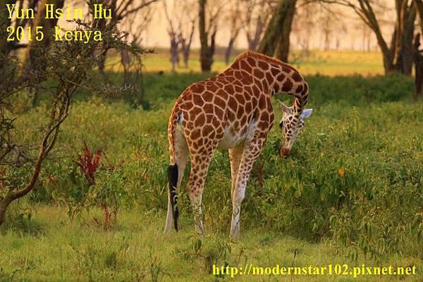 10408223Lake Nakuru894A2551 (640x427)