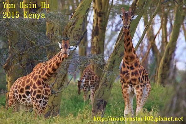 10408223Lake Nakuru894A2372 (640x427)