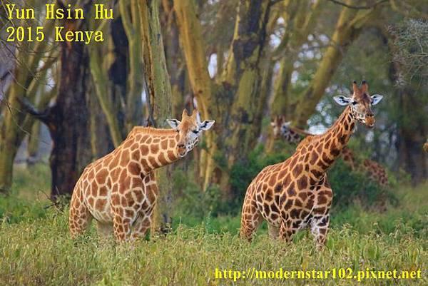 10408223Lake Nakuru894A2360 (640x427)