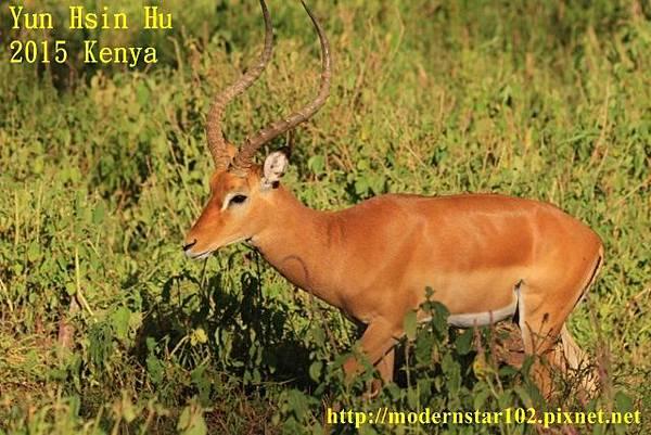 10408223Lake Nakuru894A2290 (640x427)