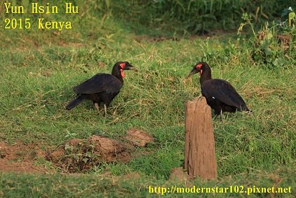 10408223Lake Nakuru894A2331 (640x427)