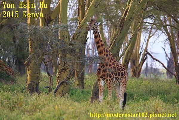 10408223Lake Nakuru894A2345 (640x427)