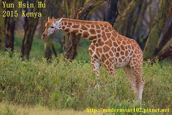 10408223Lake Nakuru894A2393 (640x427)