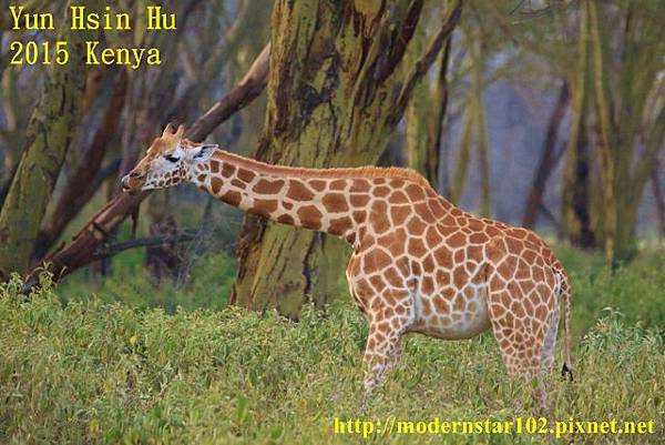 10408223Lake Nakuru894A2380 (640x427)