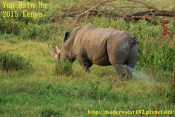 10408223Lake Nakuru894A2394 (640x427)