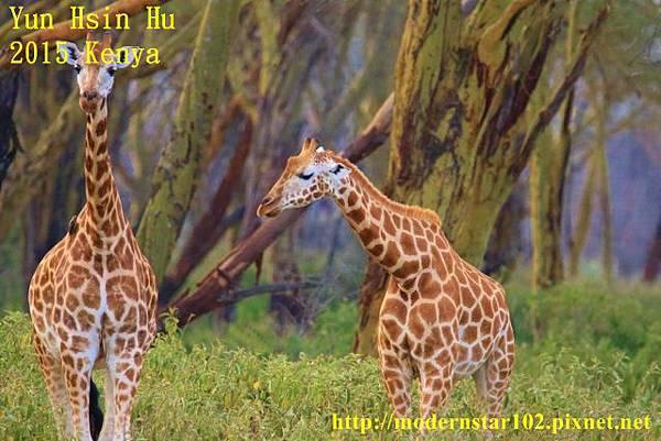 10408223Lake Nakuru894A2385 (640x427)