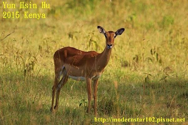 10408223Lake Nakuru894A2091 (640x427)