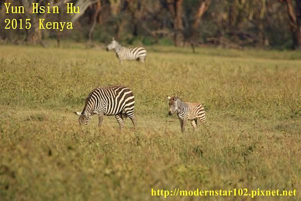10408223Lake Nakuru894A2173 (640x427)