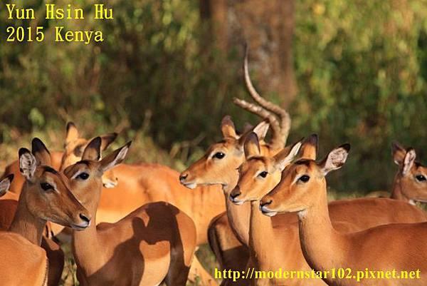10408223Lake Nakuru894A2225 (640x427)