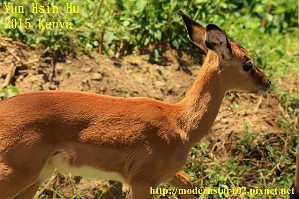10408223Lake Nakuru894A2009 (640x427)