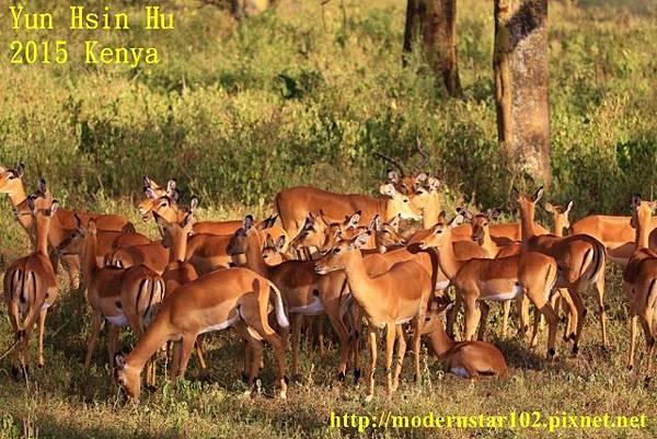 10408223Lake Nakuru894A2201 (640x427)