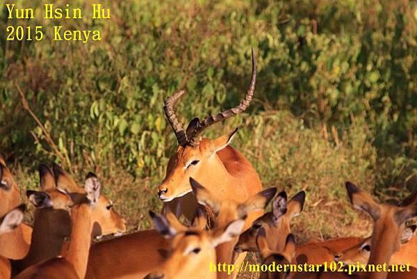 10408223Lake Nakuru894A2220 (640x427)