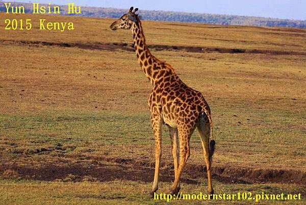 10408224Mara Leisure Camp894A2984 (640x427)