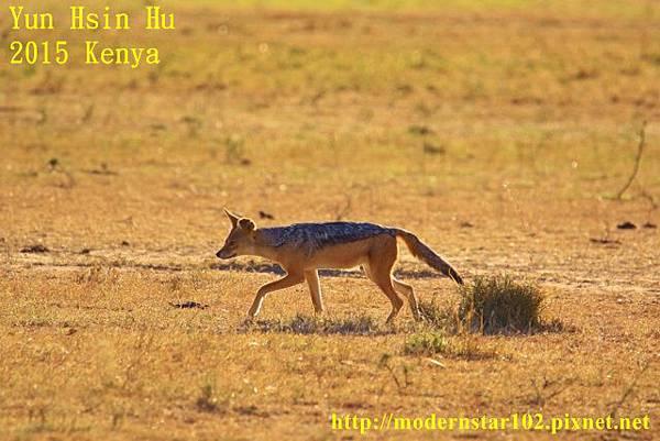 10408224Mara Leisure Camp894A2979 (640x427)