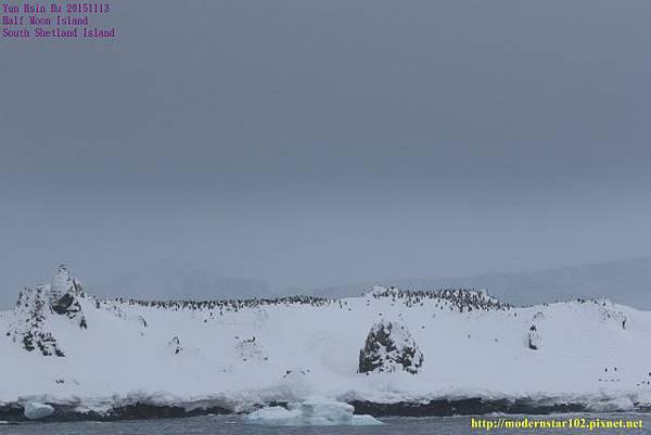 1041113Half Moon Island894A4699 (640x427).jpg