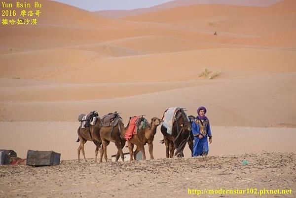 1050409撒哈拉沙漠894A7296 (640x427).jpg