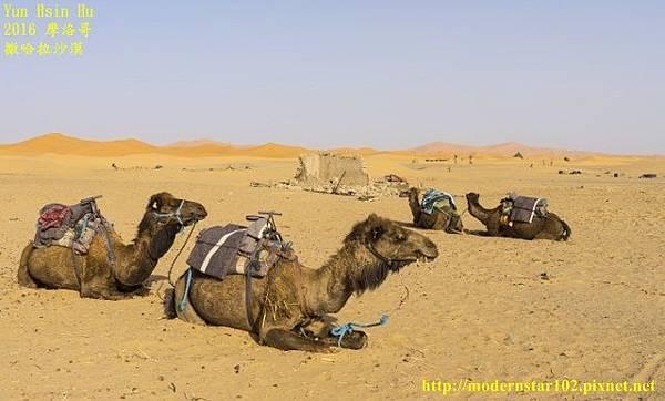 1050409撒哈拉沙漠DSC00482-1 (640x386).jpg