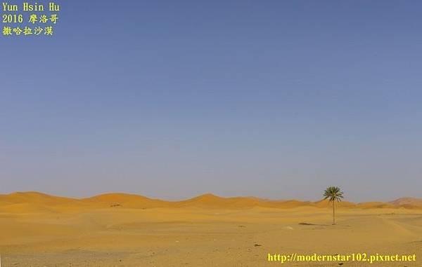 1050409撒哈拉沙漠DSC00499-1-1 (640x406).jpg