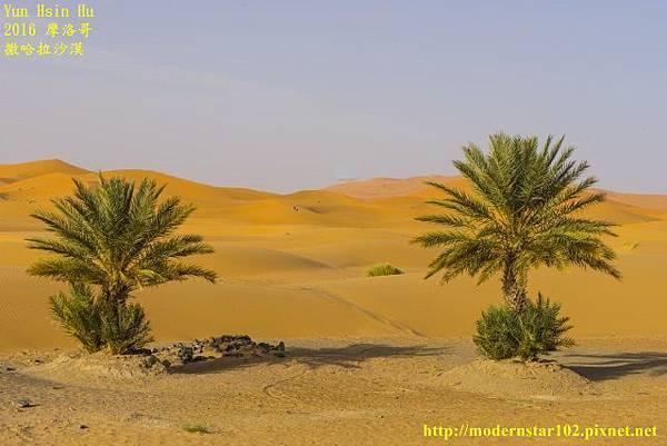 1050409撒哈拉沙漠DSC00501-1 (640x427).jpg