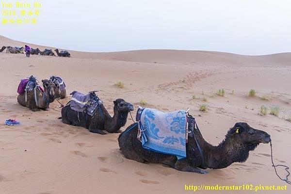 1050409撒哈拉沙漠DSC00540-1 (640x427).jpg