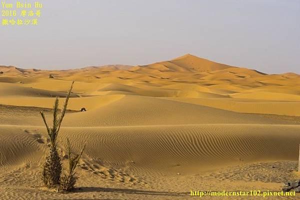 1050409撒哈拉沙漠DSC00500-1 (640x427).jpg