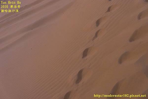 1050409撒哈拉沙漠DSC00532-1 (640x427).jpg