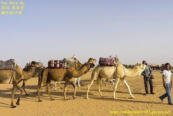 1050409撒哈拉沙漠DSC00489-1 (640x427).jpg