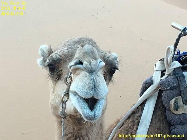1050409撒哈拉沙漠IMG_0123 (640x480).jpg