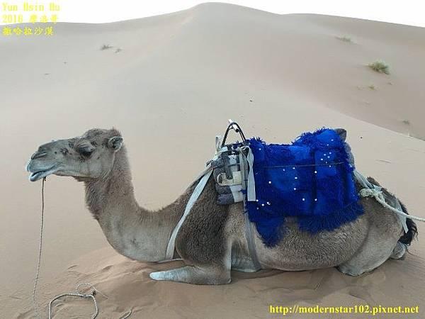 1050409撒哈拉沙漠IMG_0126 (640x480).jpg