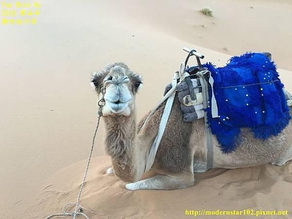 1050409撒哈拉沙漠IMG_0121 (640x480).jpg