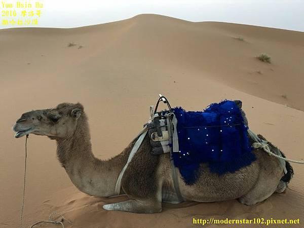 1050409撒哈拉沙漠IMG_0127 (640x480).jpg