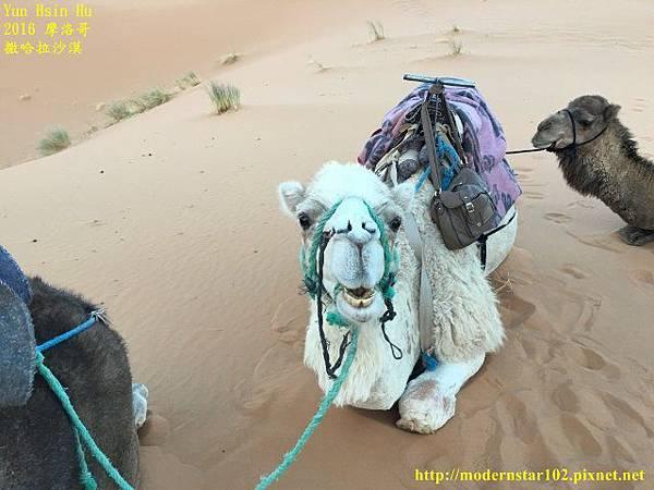 1050409撒哈拉沙漠IMG_0128 (640x480).jpg