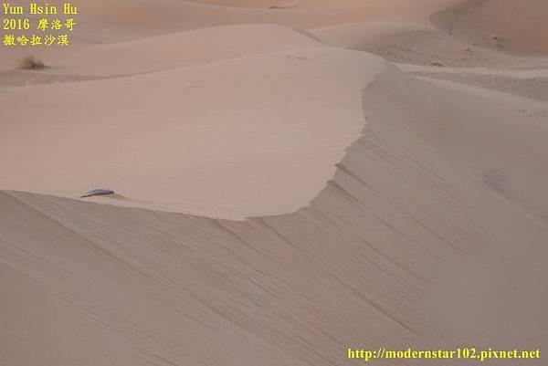 1050409撒哈拉沙漠894A7430 (640x427).jpg