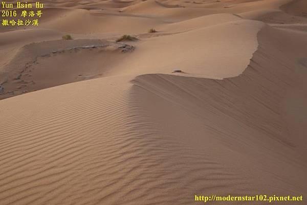1050409撒哈拉沙漠894A7489 (640x427).jpg