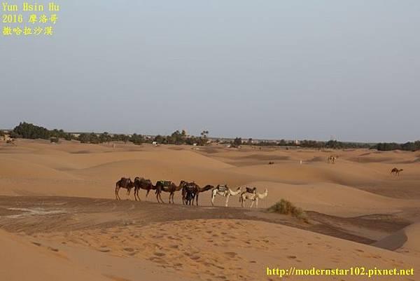 1050409撒哈拉沙漠894A7527 (640x427).jpg