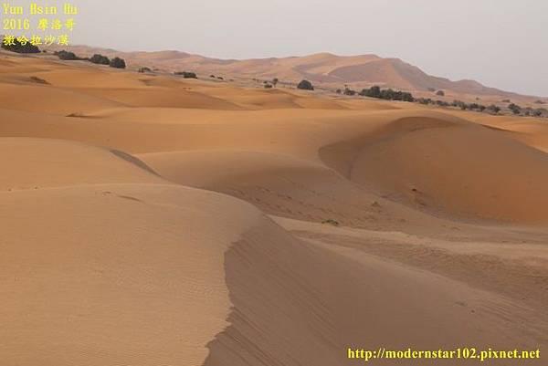 1050409撒哈拉沙漠894A7525 (640x427).jpg